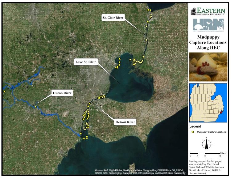 mudpuppy capture locations through 2015